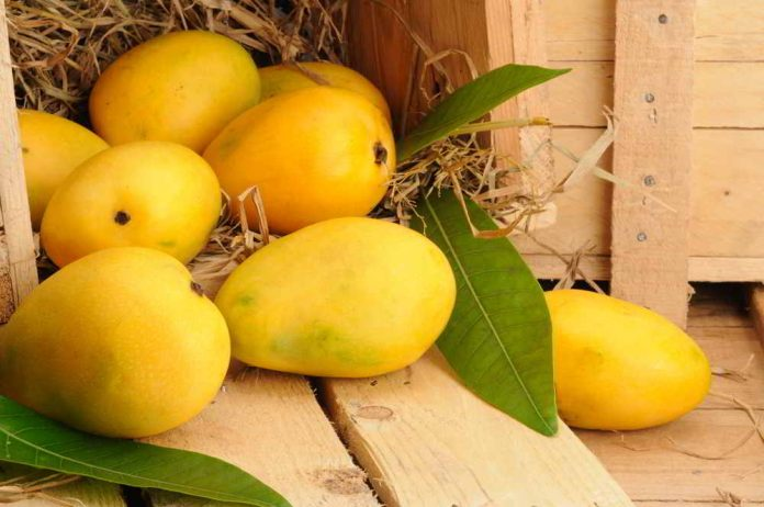Can diabetics eat mangoes